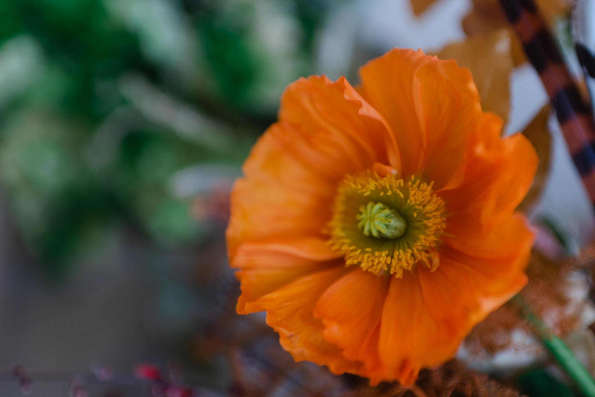 Crazy Love Shots - Chantale Primrose - Otaduy - Hacienda Campo y Olivo - Mercedes Caro Arte Floral